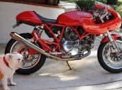 Ducati sport 1000s 60
