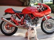 Ducati sport 1000s 64